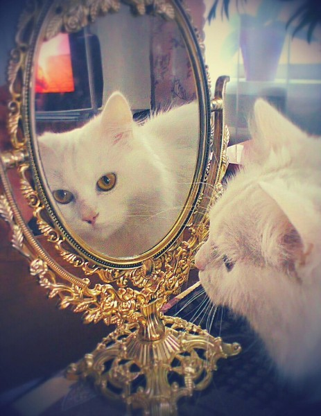 Кошка перед зеркалом