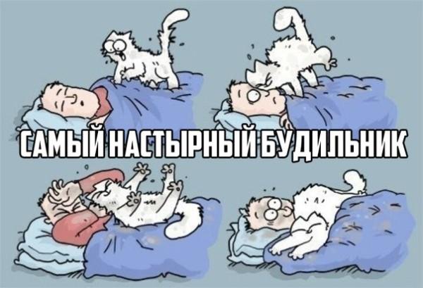 Кот Саймона будильник