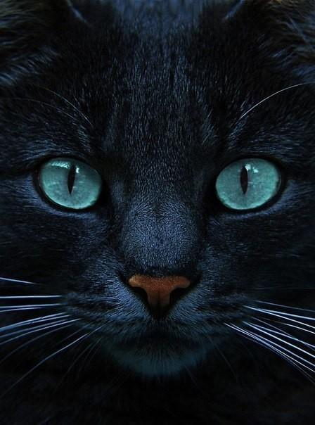 Кот красавец взгляд
