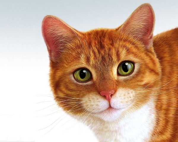 Рыжий кот с зелеными глазами фото