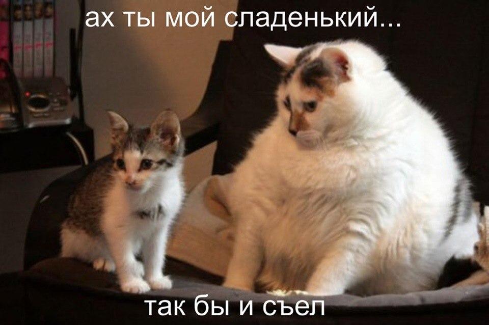 Очень толстая кошка и маленький котенок