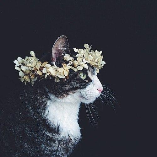 Кошка в венке