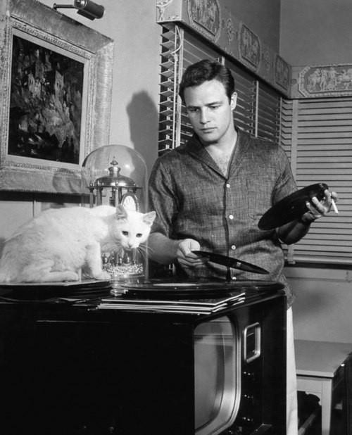 Марлон Брандо и его любимый кот.