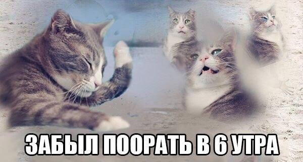 Смотреть картинки котов с надписями