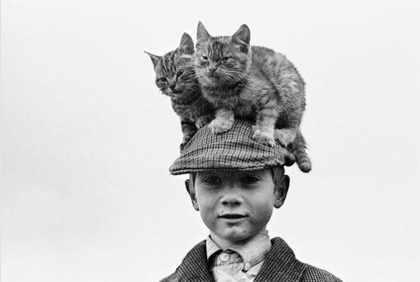 2 кота лучше чем один