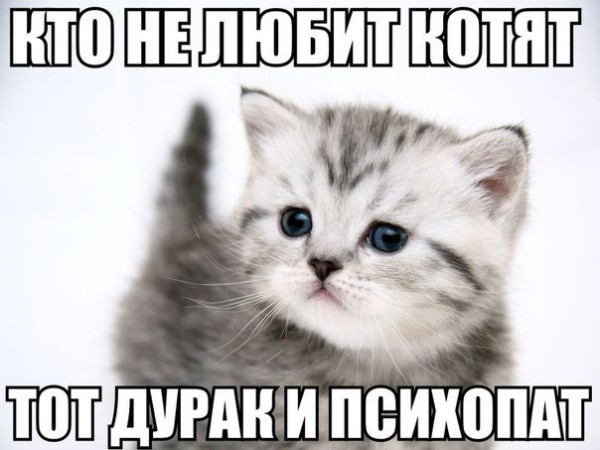 Cкачать картинки котов с надписями
