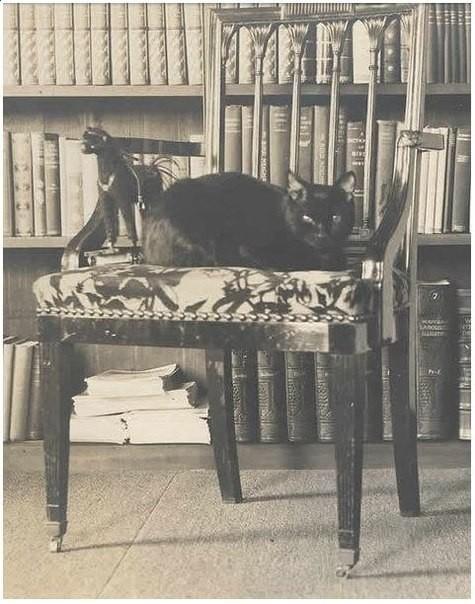 Кошка дочки Марка Твена
