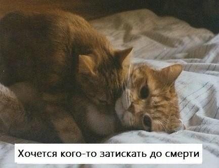 Кот и кошечка