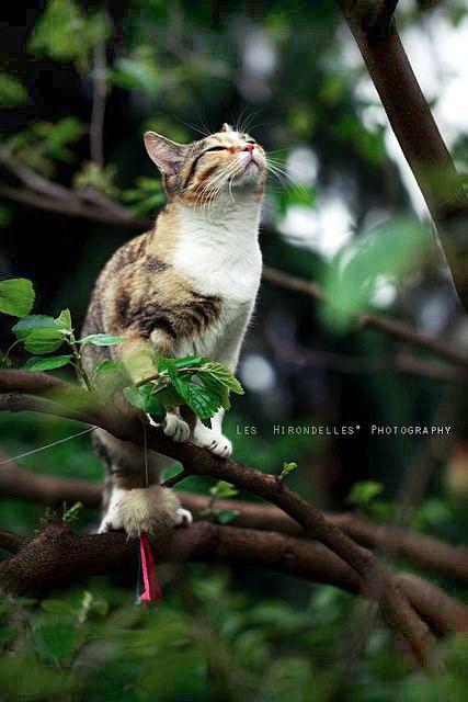 Кошка улыбается фото