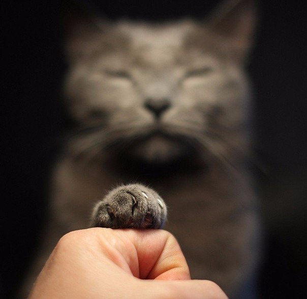 Котик само спокойствие