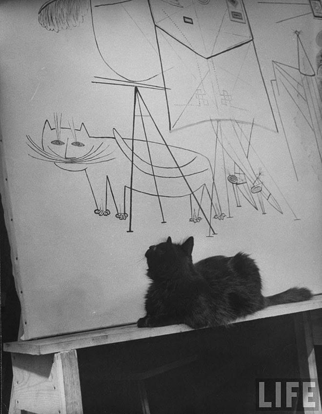 Из фотосессии кота фотографа Гийона Милли
