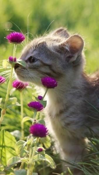 Картинки про котят бесплатно