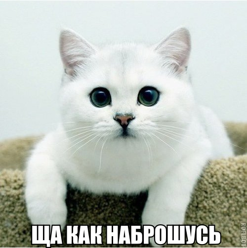 Белый кот и умный взгляд