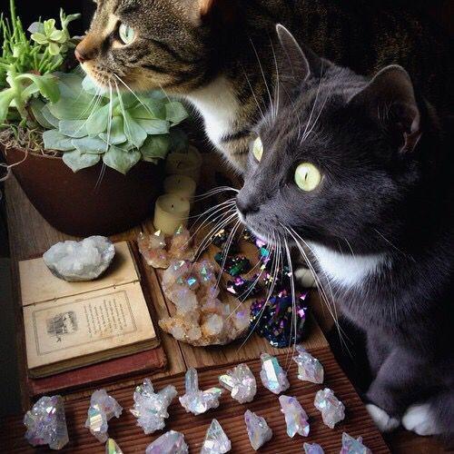 Кошки ведьмы из Обитель лесных земель