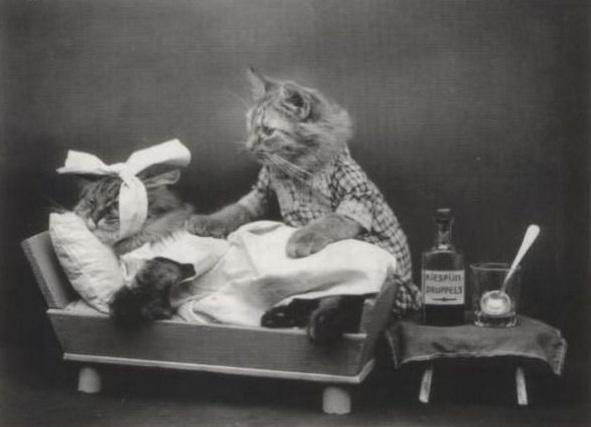Котик врач ретро фото