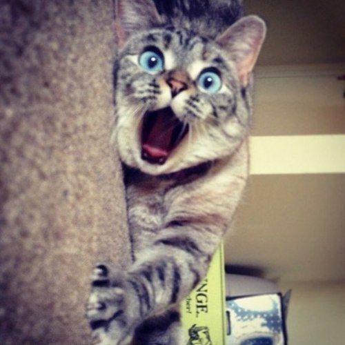 Кошка очень удивлена