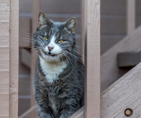 Чеширский Кот я нашла тебя
