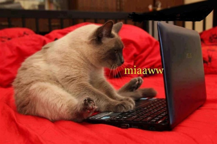 Кот с ноутбуком
