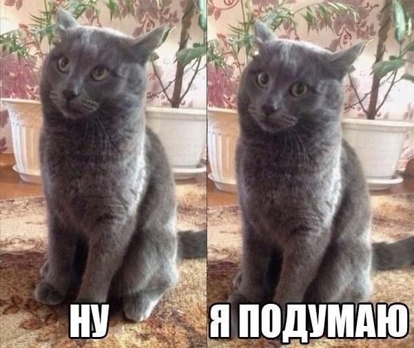 Кот, может найдешь работу?