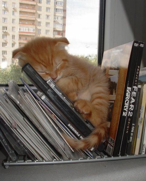 Спящий котенок на дисках