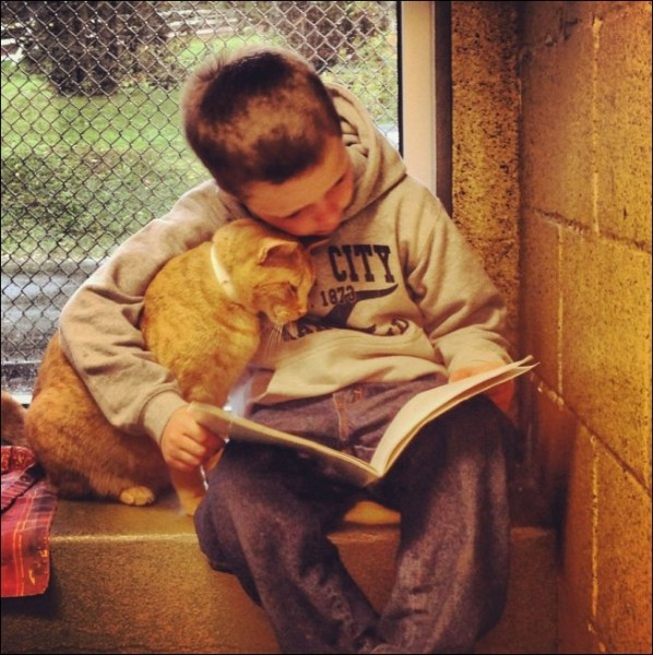 Мальчик и  рыжий кот читают книгу