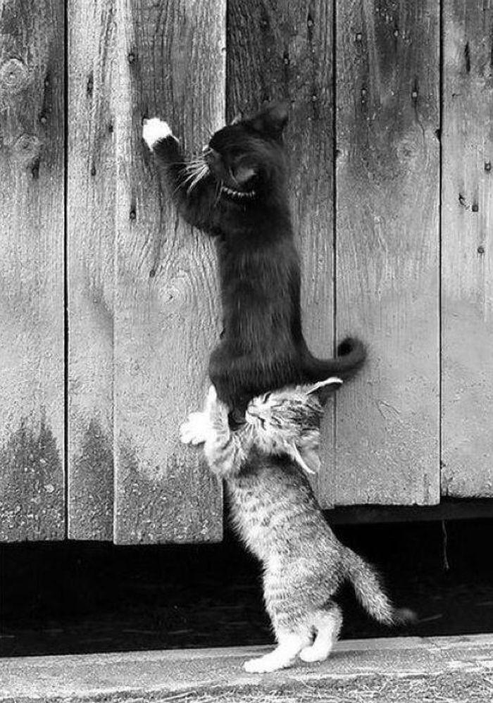2 маленьких котенка