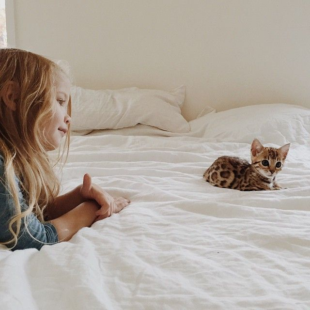 Фото очень милого котенка