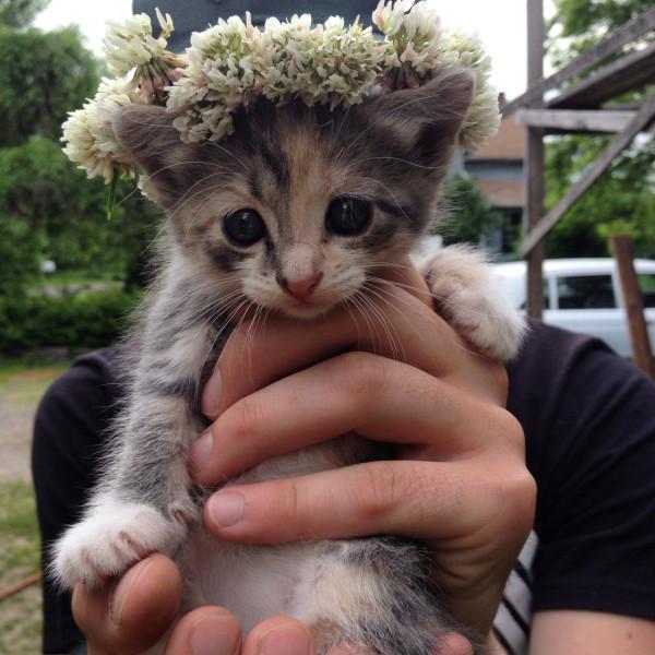 Котенок в венке