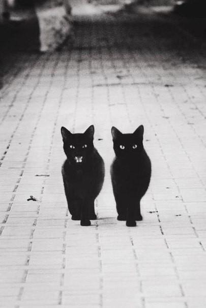 Черные коты ганстеры