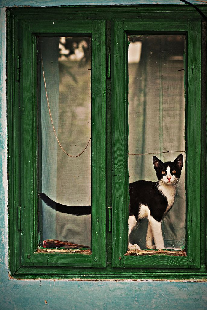 Кот у зеленого окна