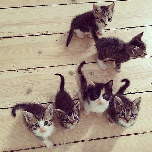 Маленькие глазастые котята