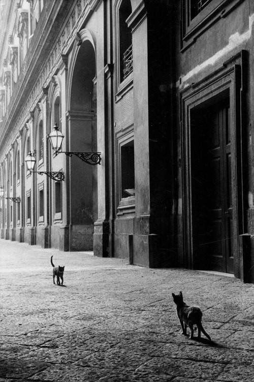 Непольские коты, Италия, 1958