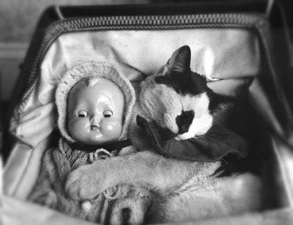 Кот в коляске. Ретро фото