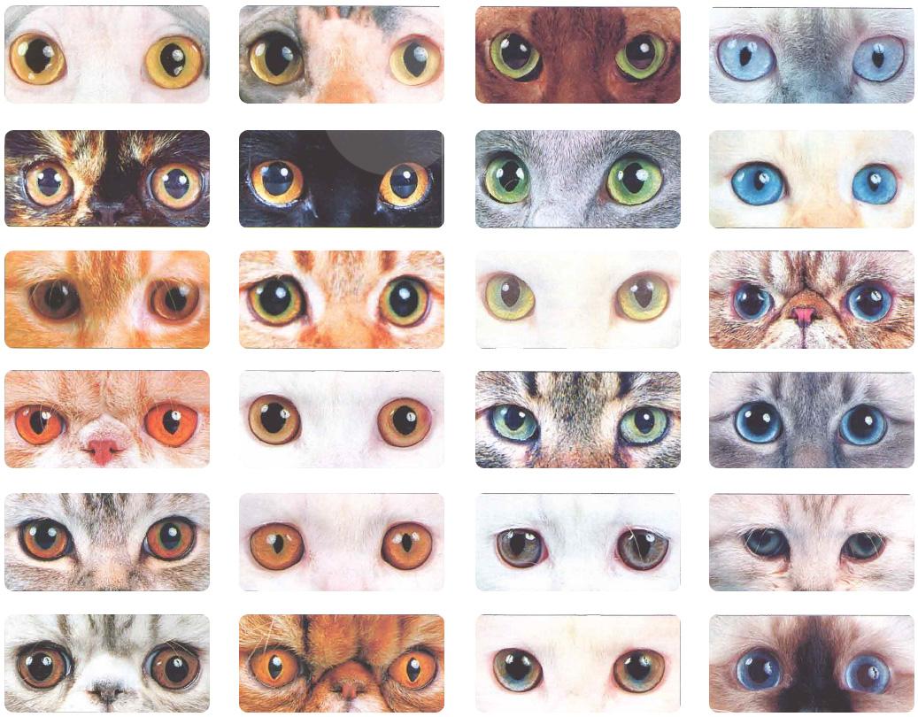 Глаза кошек разных пород