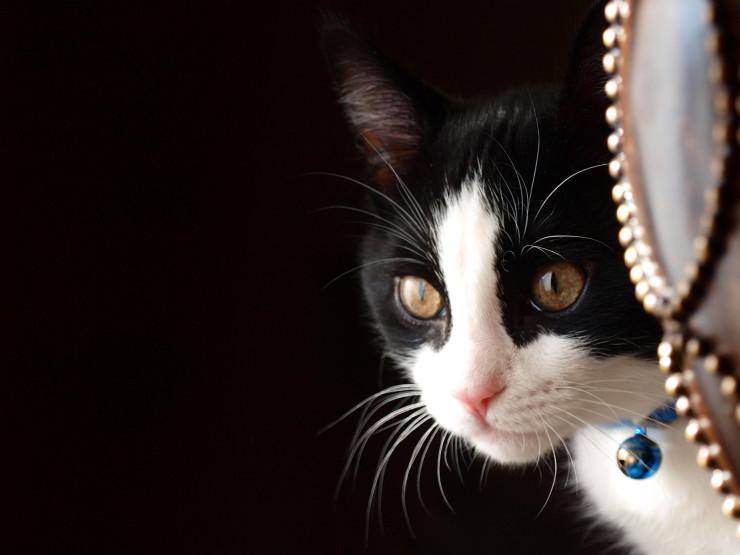 Черно-белая кошка с красивыми глазами