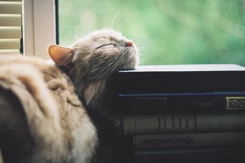 Котенок спит на книгах