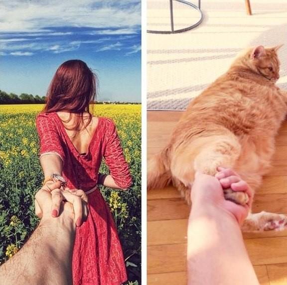 Смешные приколы про кошек фото
