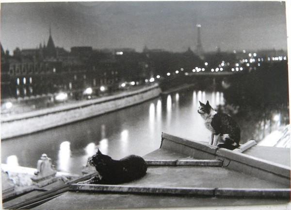 2 кота на крыше Парижа 1947 год