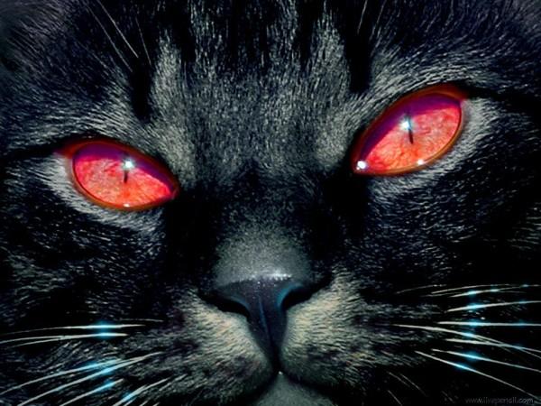 Черный кот с красными глазами