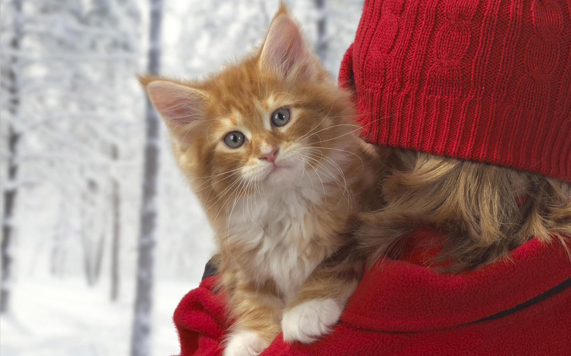 Рыжий котенок и девушка в красной шапке