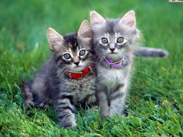 Котенок смешной и милый