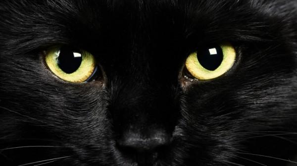 Глаза черной кошки
