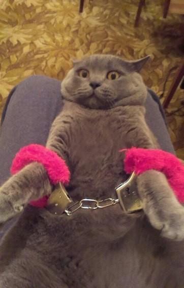 Смешные приколы про котов и кошек