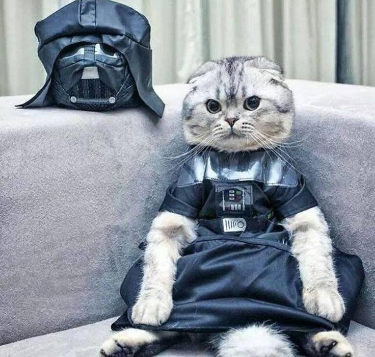 Кот Вэйдера или кот из звездных войн.