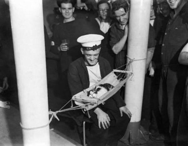 Кот в гамаке и команда матросов, 1941 год.