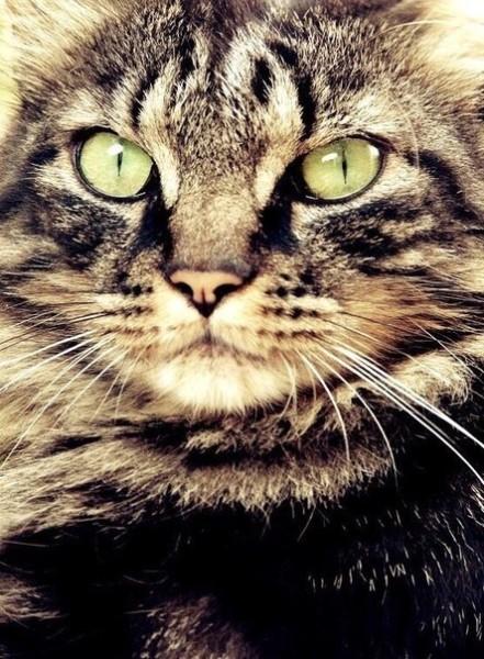 Очень очень красивая кошка