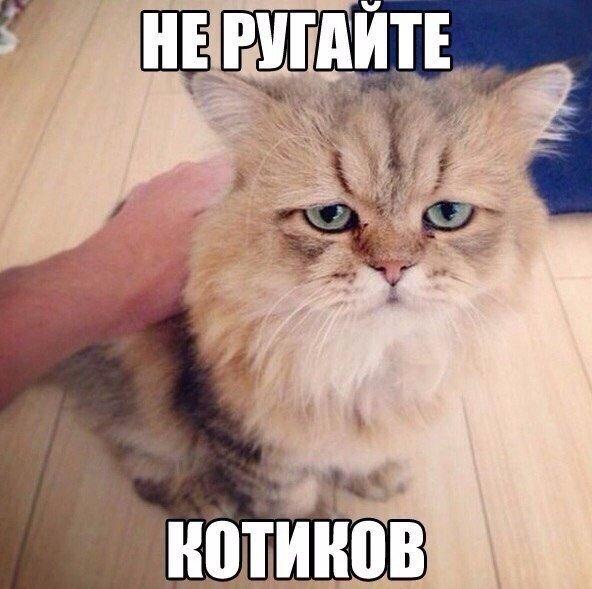 Не ругайте котиков. Никогда!