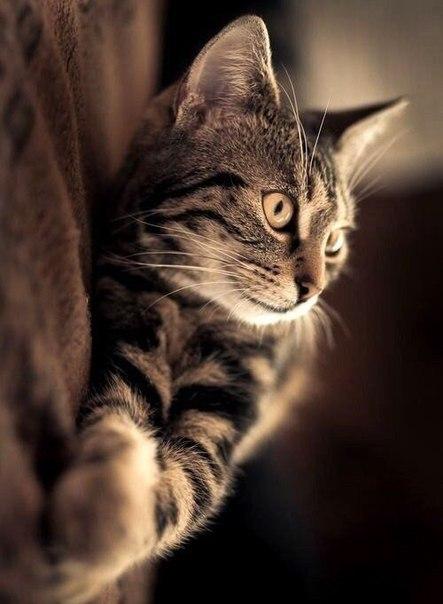Кошка лежит на боку