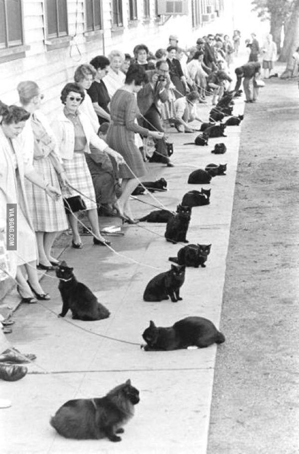 Фото брюнетки и кота