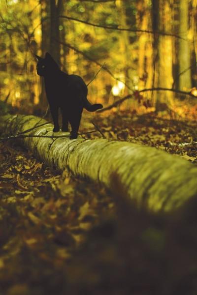Магическая черная кошка